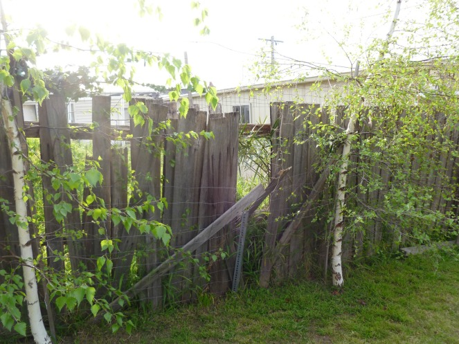 Before: fecking fence