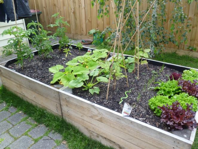 urban gardener, urban gardening, grow your own