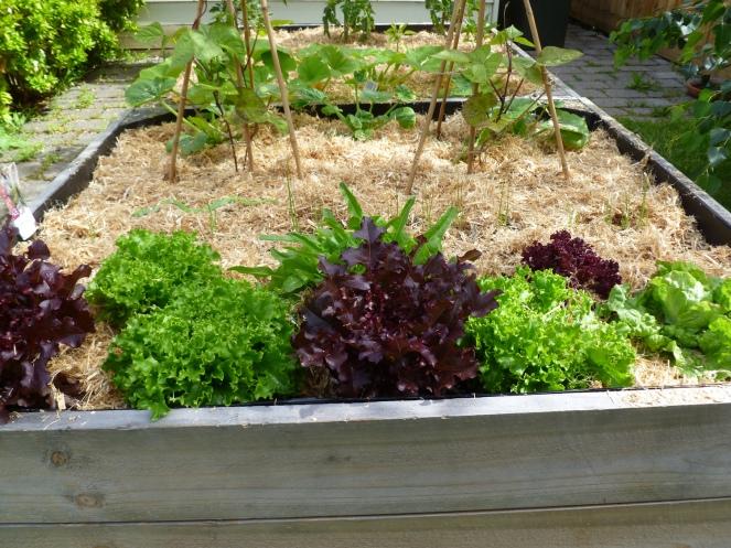 grow your own, urban gardening