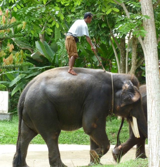 elephant ride bali, elephant ride asia, elephant adventures, midlife, boomer, fifty-something