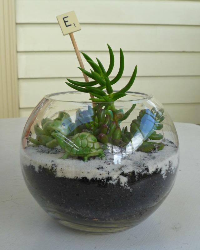 DIY terrarium, terrarium tutorial, how to, midlife, boomer, fifty-something