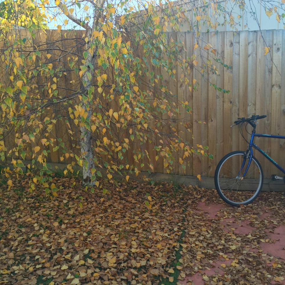 subdivision geelong, downsizing, silver birch trees, autumn geelong, midlife, boomers, being fifty-something
