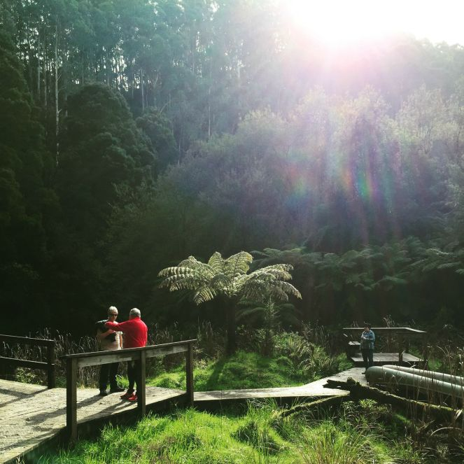 Lake Elizabeth, Otways, Visit Victoria, Great Ocean Road, Visit Forrest, rainforest walks