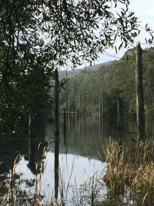 Lake Elizabeth, Otways, Visit Victoria, Great Ocean Road, Visit Forrest, rainforest walks